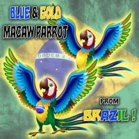 Macaw Cartoon with Brazil Flag Colors © BluedarkArt