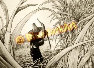 Coupeur de Cannes / Sugar Cane Worker / Lavoratore Canna da Zucchero © BluedarkArt